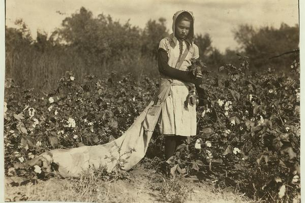 1280px no known restrictions picking cotton by lewis w hine 1916 loc